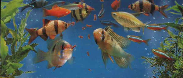 Как правильно распаковывать аквариумных рыбок?