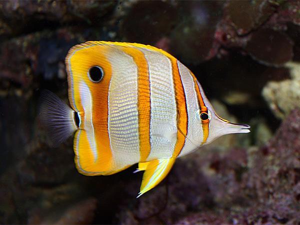 Профилактика аквариума и инвентаря