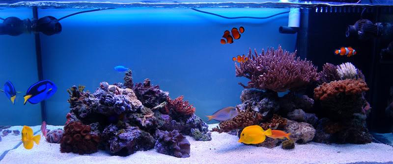 Морская вода: содержание солей и элементов