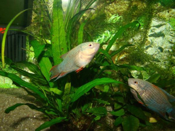 Бициллин-5 для аквариума