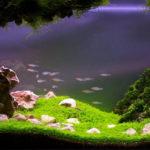 Доступность газов для водных обитателей
