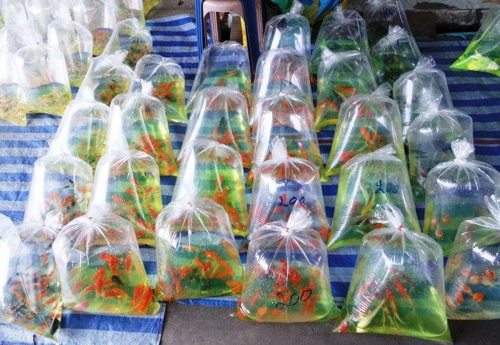 Как правильно упаковывать аквариумных рыбок?