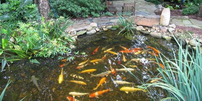 Дискокотилез рыб.