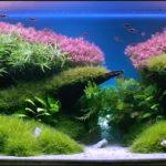 Оформления аквариума: стили,описание,фото .