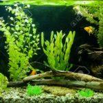 Минеральное питание аквариумных растений