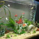 Декоративный аквариум — уход