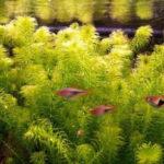 Самые распространенные виды аквариумных растений