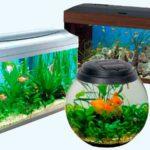 Как правильно выбрать здоровых рыбок в аквариум?