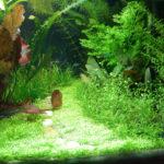Травник — аквариум с растениями.