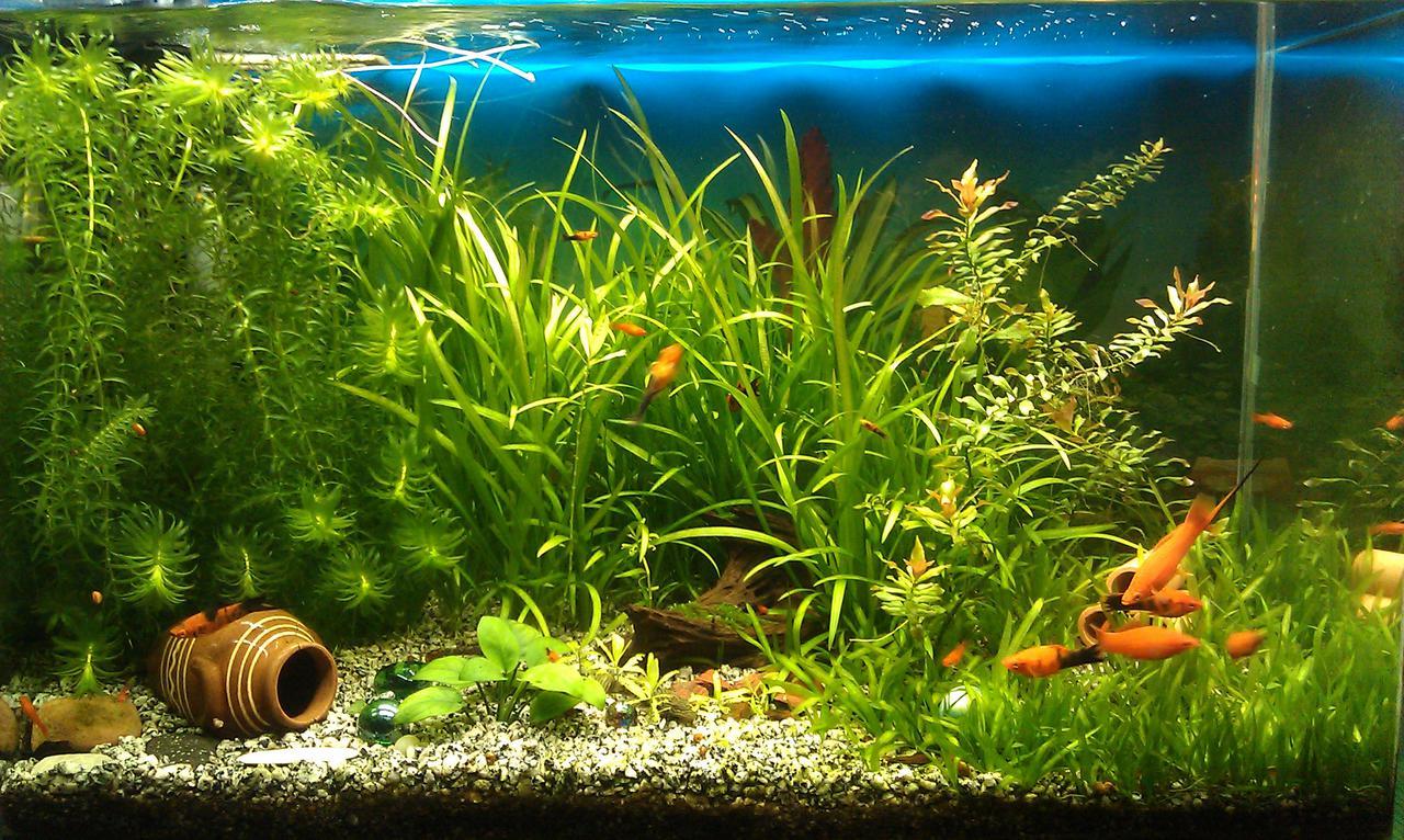 Десять основных правил для начинающего аквариумиста.