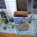 Нерестовый аквариум или нерестовик,а также способы нереста и оборудование.