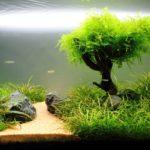 Как растут в аквариуме растения?