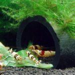 Аквариумные растения для креветок.