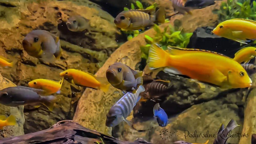 Почему,чем меньше рыбы в аквариуме,тем лучше?