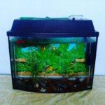 Аквариум 30 литров: описание,уход,содержание,фото,видео.