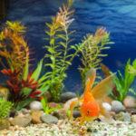Две наиболее распространенные болезни пресноводных аквариумных рыбок