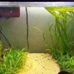 Нитраты в аквариуме: описание причины,борьба,фото,видео.