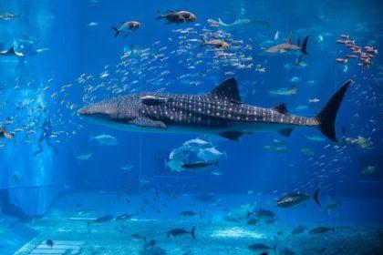 Как чистить аквариум от зеленого налета в домашних условиях?