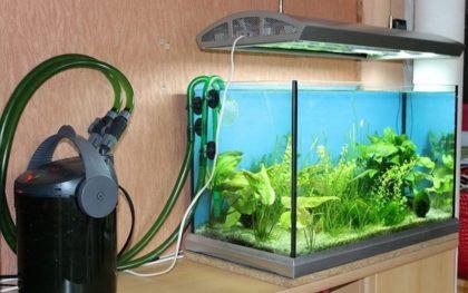 Температура воды в аквариуме для рыбок: оптимальная