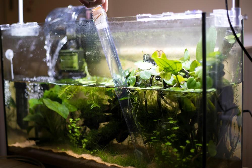 Параметры воды в аквариуме — pH, нитраты, фосфор