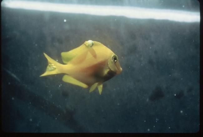 Как лечить рыбок солью в аквариуме?