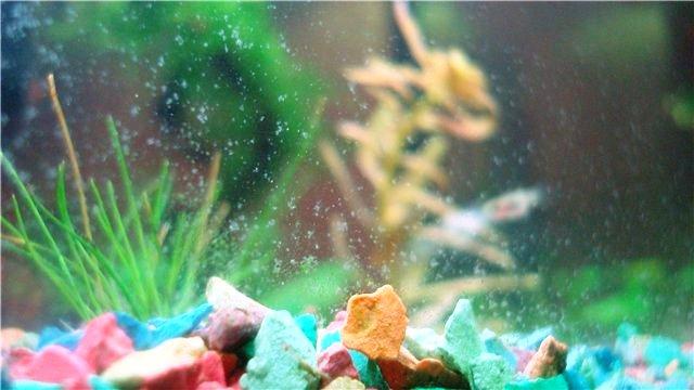 Белый налет на стенках аквариума — что делать?