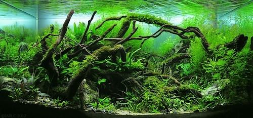 Болезни аквариумных растений и их причины