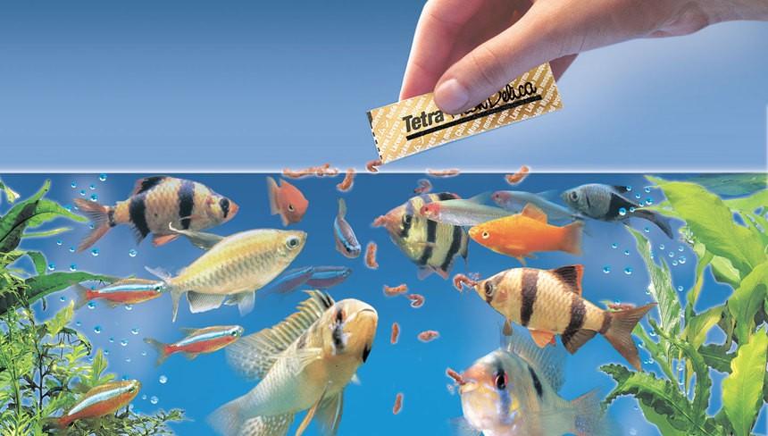 Способы кормления аквариумных рыбок
