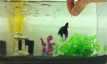 Водоросли для аквариума - какие лучше и красивее