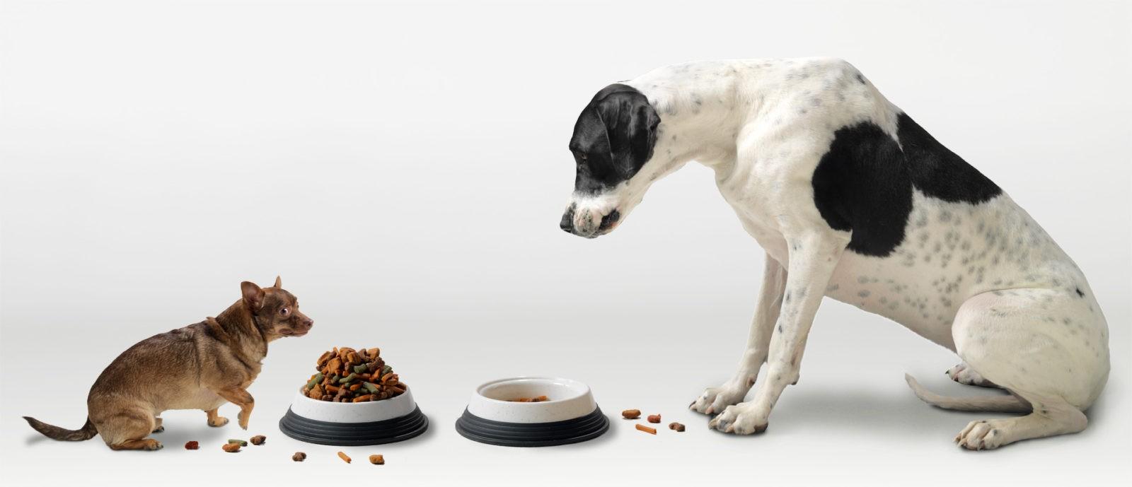 Как правильно выбрать корм для домашних животных: описание,фото