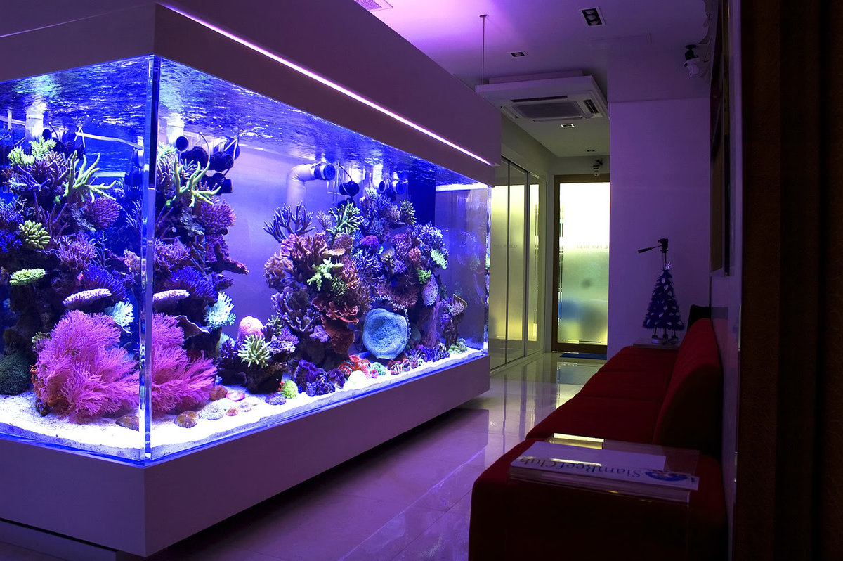 Как выбрать аквариум для дома: описание,фото
