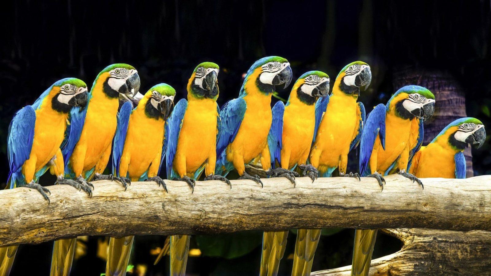Попугай Ара: описание,фото,уход,содержание,питание