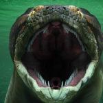 Титанбоа: змея которая могла нападать на слона и весила тонну