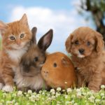 Мир животных — виды, род, семейства, отряды, классы и типы