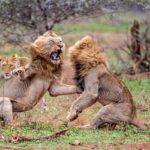 Различные виды поведения животных