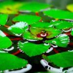 Растения, плавающие в аквариуме. Какое лучше выбрать?