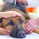Эвтаназия домашних животных: принятие решения