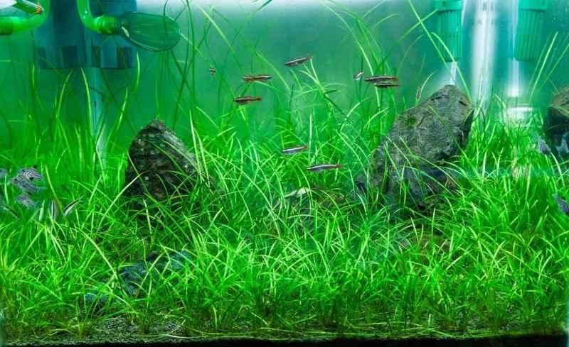 Как сажать аквариумные растения в аквариум?