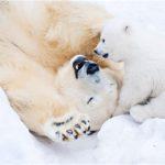 26 удивительных фактов о животных для детей