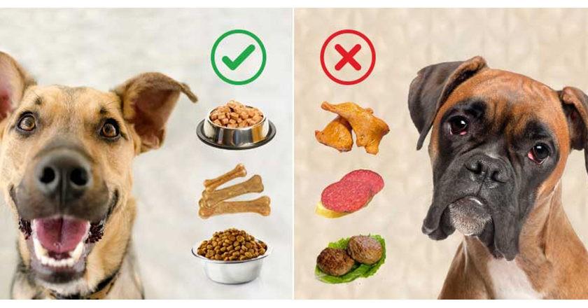 Чем кормить собаку при заболевании печени,желчного пузыря и желчных путей