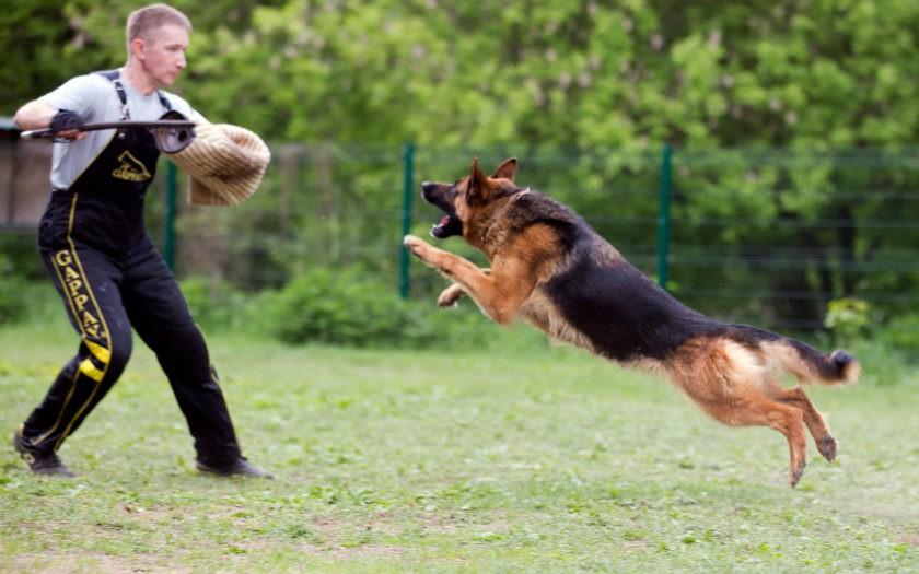 Как нужно правильно дрессировать собаку?