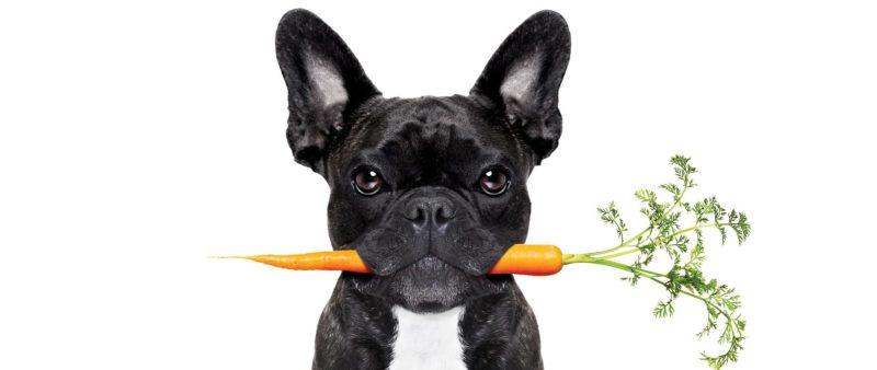 Правильное питание взрослой собаки