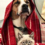 Диета для собак при болезни почек и мочевыводящих путей
