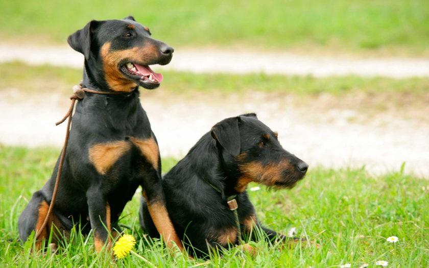 Как общаются собаки друг с другом