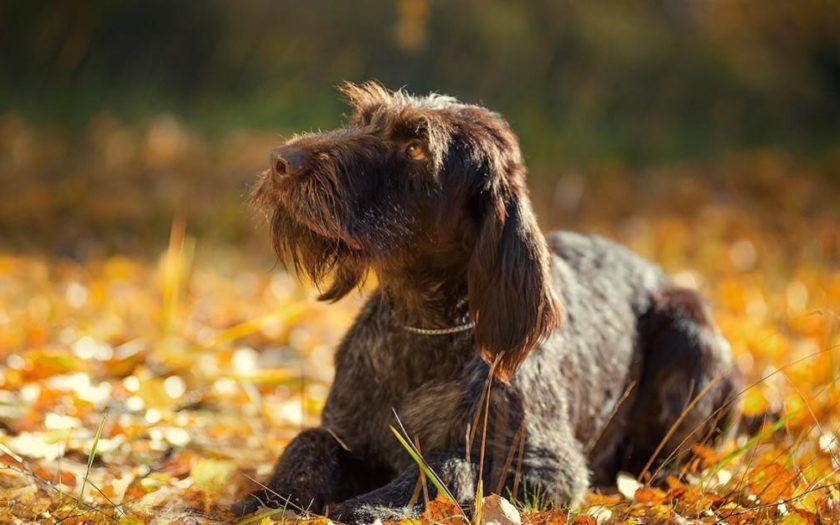 Какой пол собаки выбрать — кобеля или суку