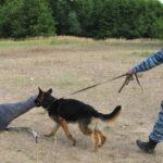 Различные виды поведения собак