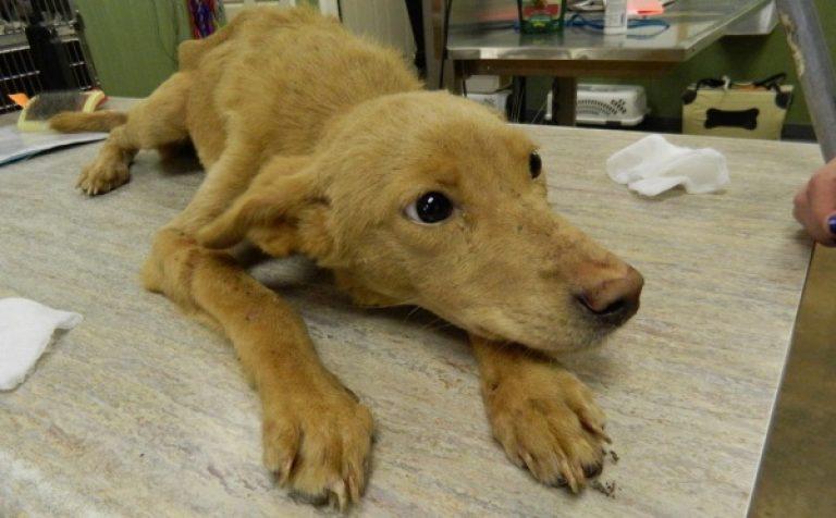 Энтерит у собак: симптомы,лечение,фото