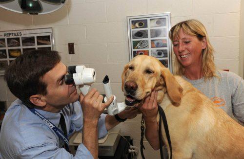 Глаукома у собак: лечение,симптомы,фото,причины