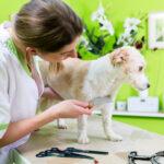 Блохи у собаки — симптомы,лечение