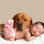 Собака и ребенок: как обеспечить безопасность?